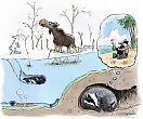 Metsän eläimet selviytyvät talvesta eri tavoin.