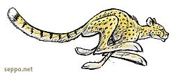 Gepardi - juoksee