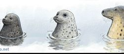 Itämeren hylkeet