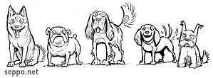Koirat – eri rodut