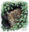 Leopardi eli pantteri