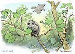 Liito-orava ruokailee haavassa