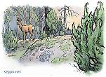 Metsäkauris ja katajat