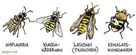 Ampiainen - kukkakärpänen - lasisiipi - kimalaiskuoriainen