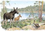 Maisema suunnitellusta Teijon kansallispuistosta