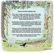 Vanha metsä sitoo ja kierrättää hiiltä