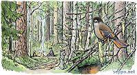 Vanha metsä – kuukkeli – retkinuotio