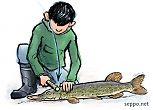 Kalan käsittely – tainnutus