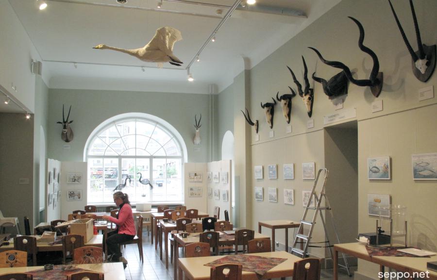 Pilapiirrosnäyttelyä pystytetään Luonnontieteellisen museon kahvilassa.